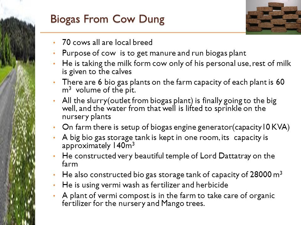 Biogas From Cow Dung 70 cows all are local breed