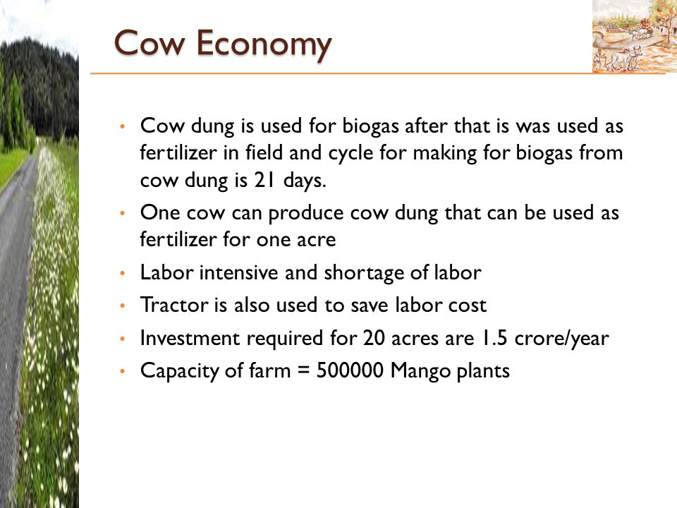 Cow Economy Cow dung is used for biogas after that is was used as fertilizer in field and cycle for making for biogas from cow dung is 21 days.