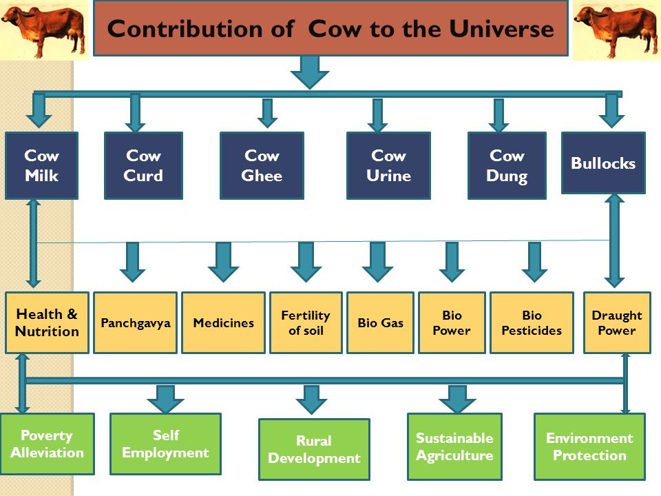 Contribution of Cow to the Universe