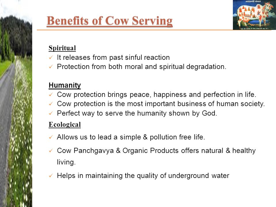 Benefits of Cow Serving