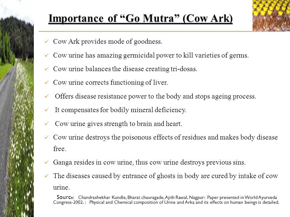 Importance of Go Mutra (Cow Ark)