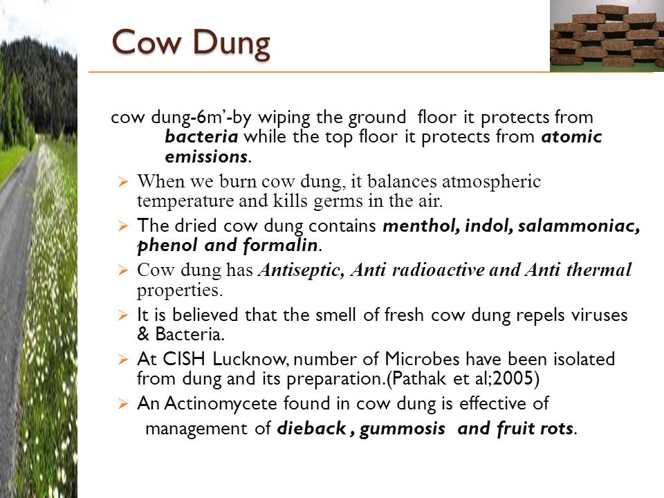 Cow Dung cow dung-6m'-by wiping the ground floor it protects from bacteria while the top floor it protects from atomic emissions.