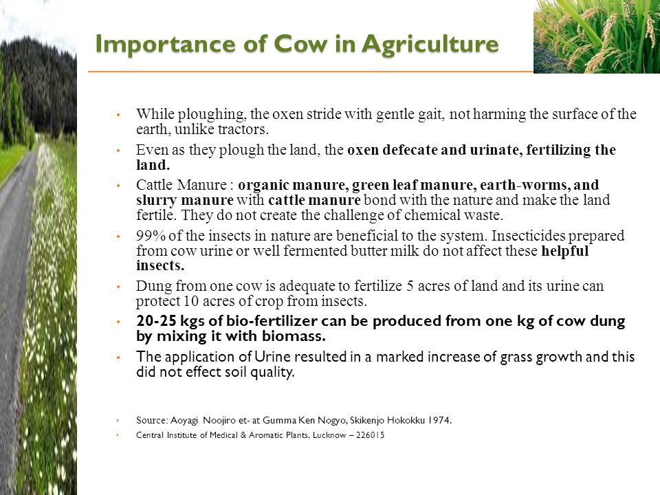 Importance of Cow in Agriculture