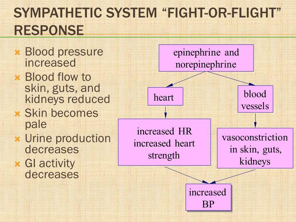 Sympathetic System Fight-or-Flight Response