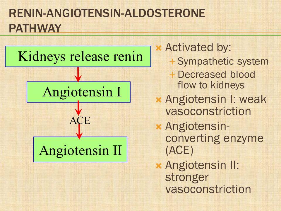 Renin-Angiotensin-Aldosterone Pathway