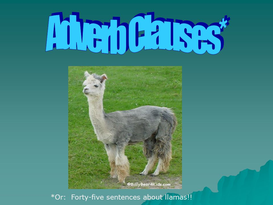 Adverb Clauses* *Or: Forty-five sentences about llamas!!
