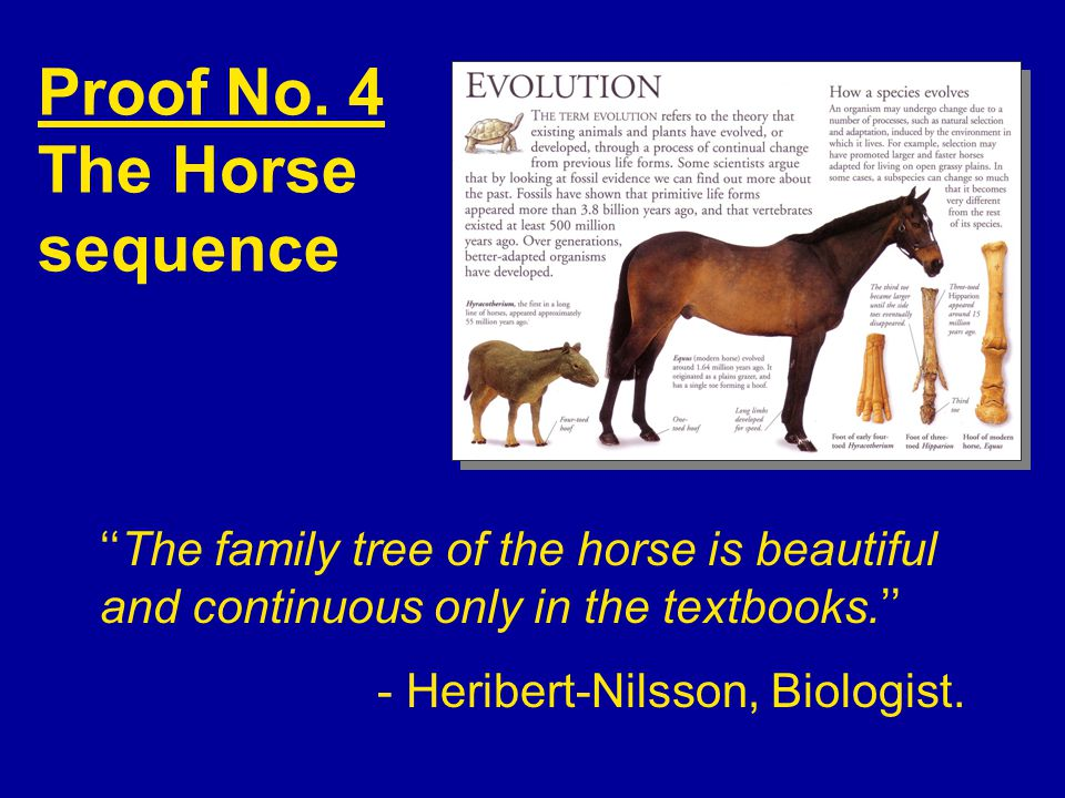Proof No. 4 The Horse sequence