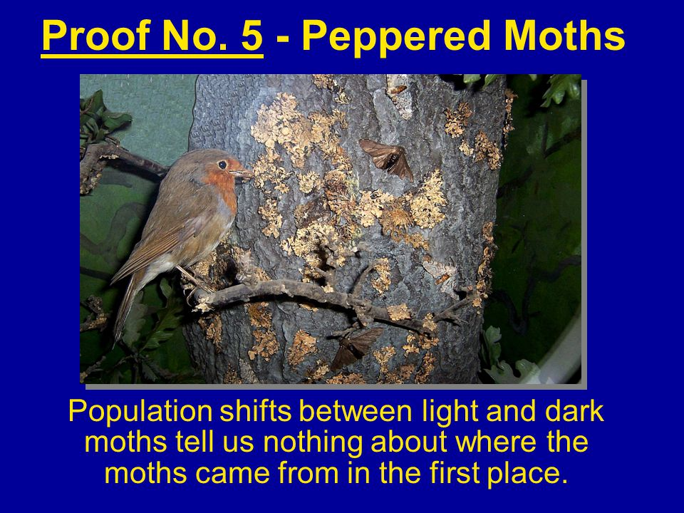Proof No. 5 - Peppered Moths