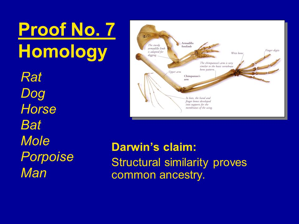 Proof No. 7 Homology Rat Dog Horse Bat Mole Porpoise Man