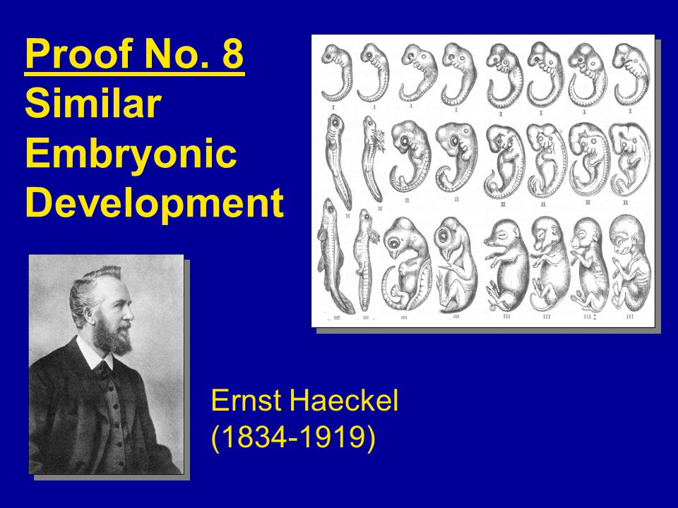 Proof No. 8 Similar Embryonic Development