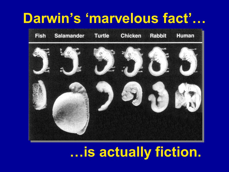 Darwin's 'marvelous fact'…