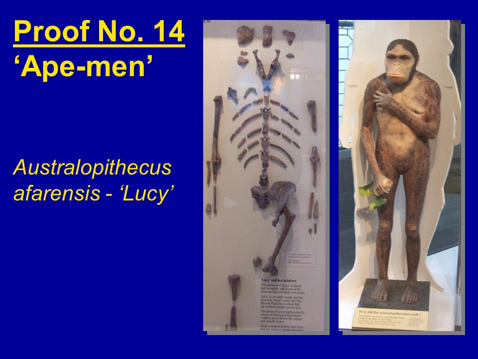 Proof No. 14 'Ape-men' Australopithecus afarensis - 'Lucy'
