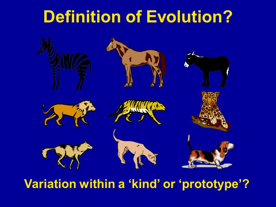 Definition of Evolution Variation within a 'kind' or 'prototype'