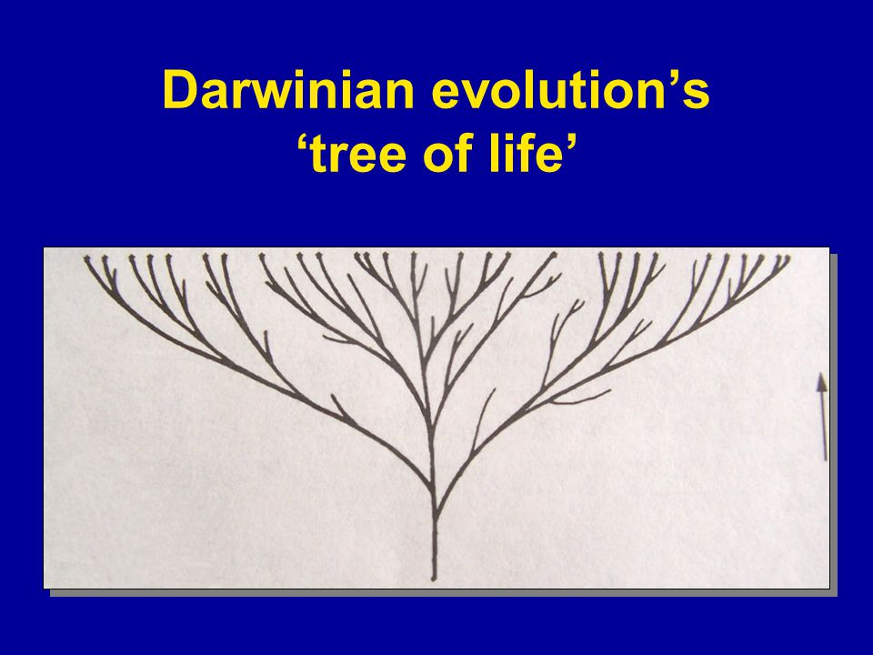 Darwinian evolution's 'tree of life'