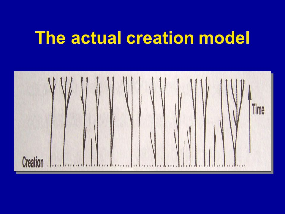 The actual creation model