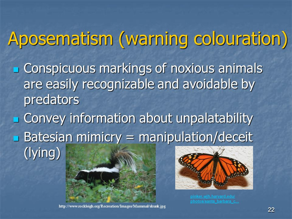 Aposematism (warning colouration)