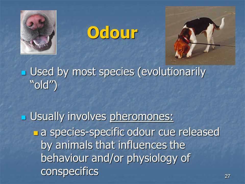 Odour Used by most species (evolutionarily old )