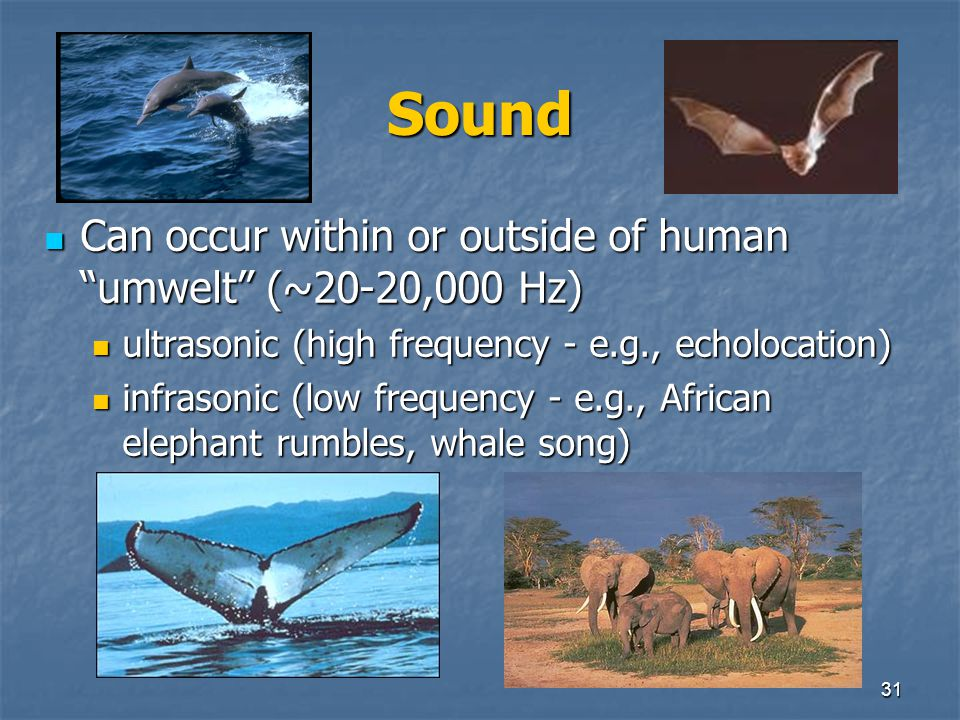 Sound Can occur within or outside of human umwelt (~20-20,000 Hz)