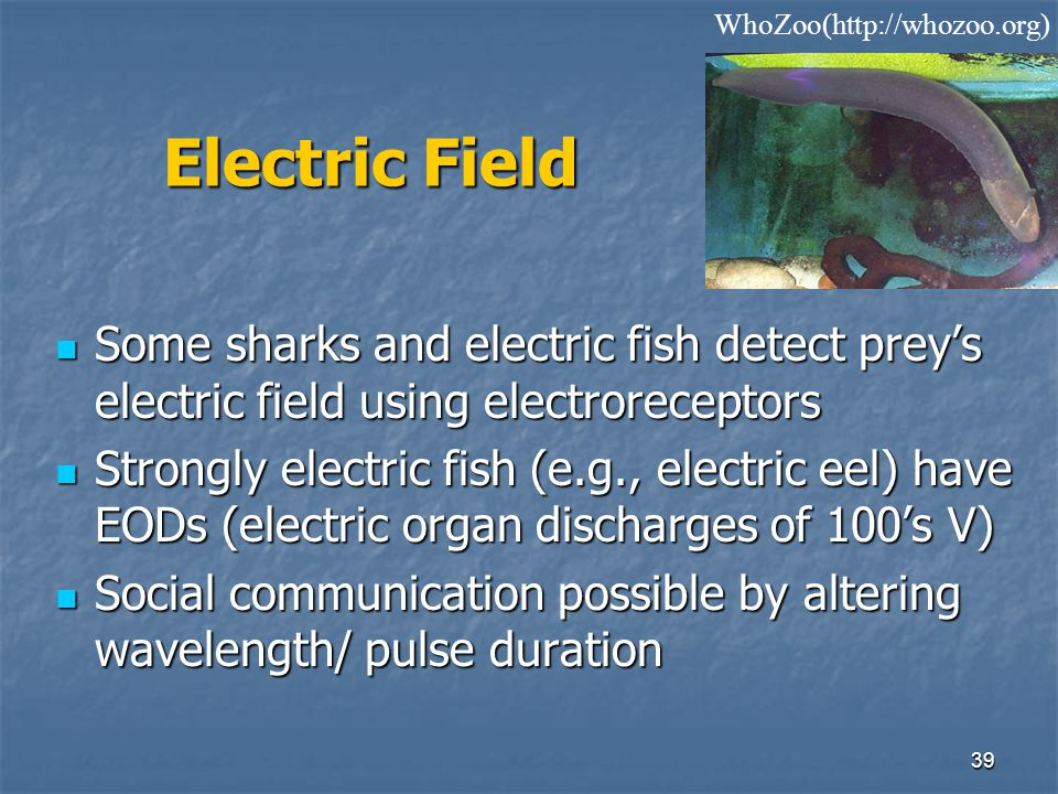 WhoZoo(http://whozoo.org) Electric Field. Some sharks and electric fish detect prey's electric field using electroreceptors.