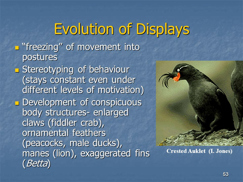 Evolution of Displays freezing of movement into postures