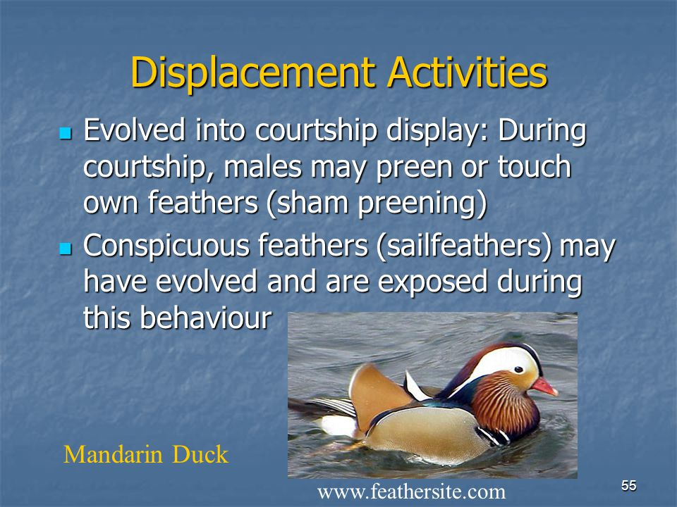 Displacement Activities