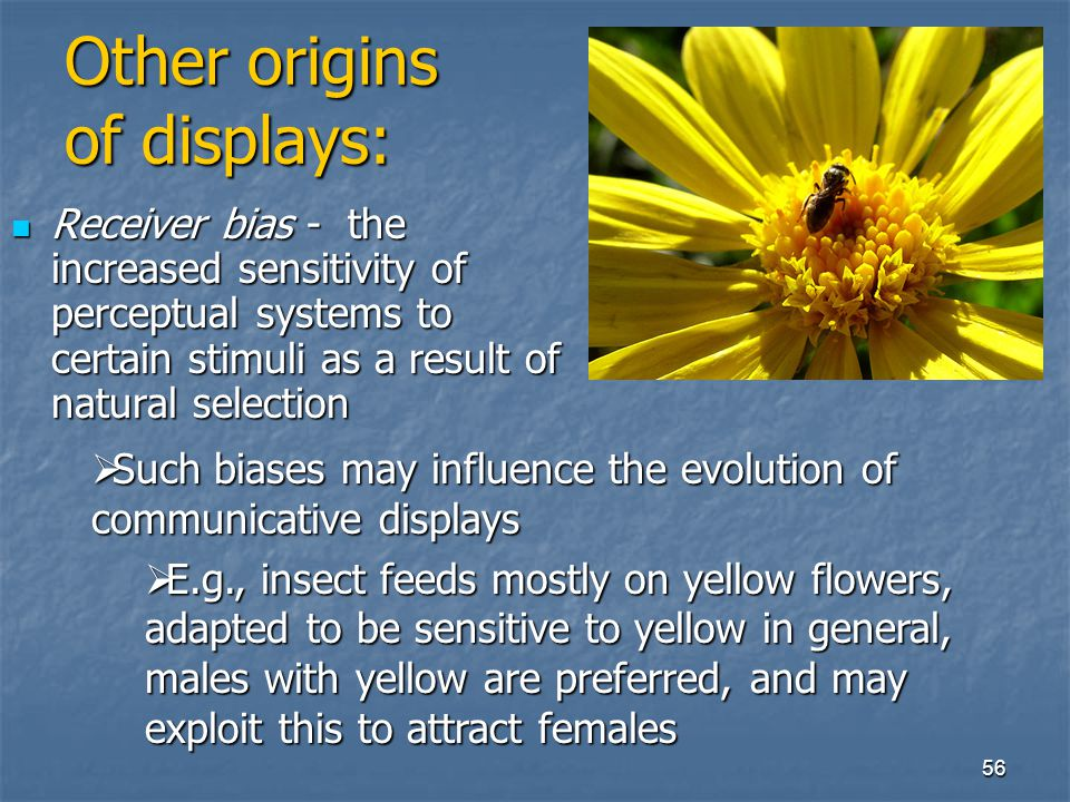 Other origins of displays: