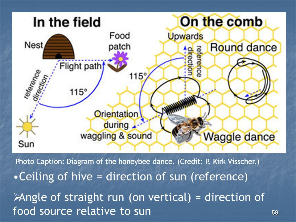 Ceiling of hive = direction of sun (reference)