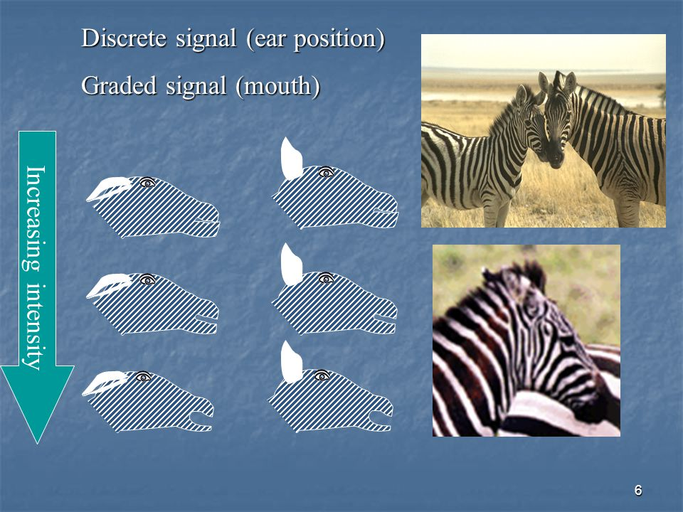Discrete signal (ear position)