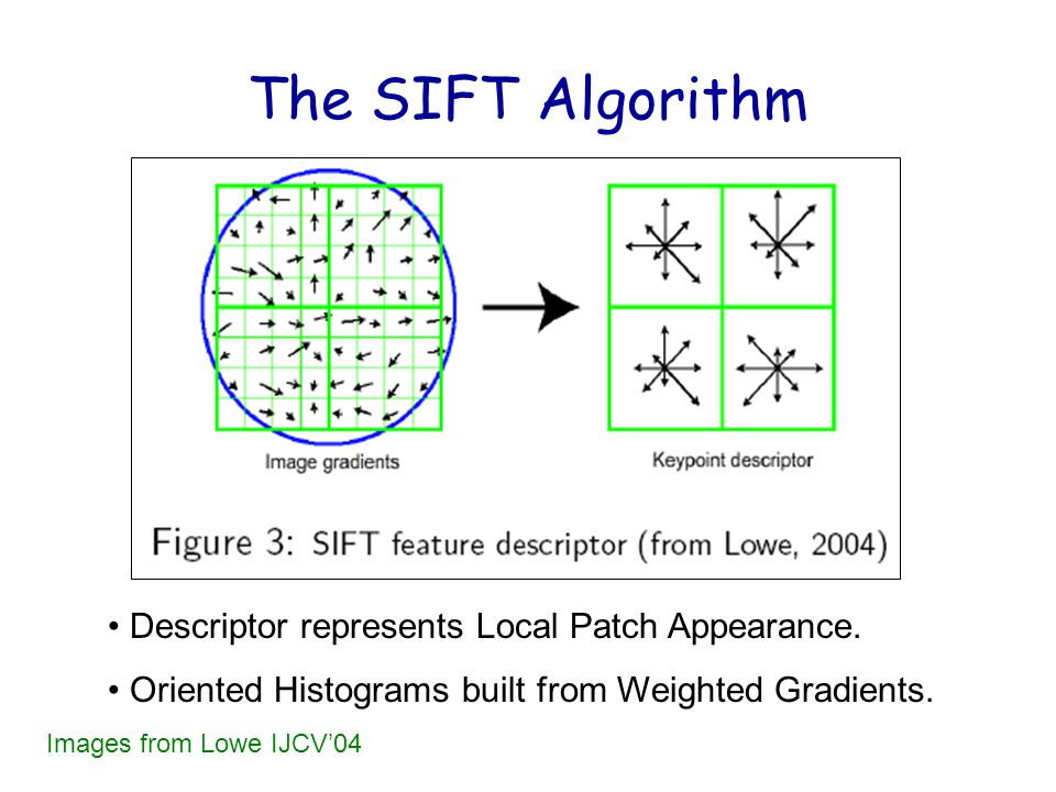 The SIFT Algorithm Descriptor represents Local Patch Appearance.