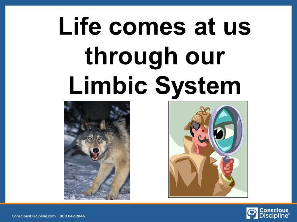 Life comes at us through our Limbic System