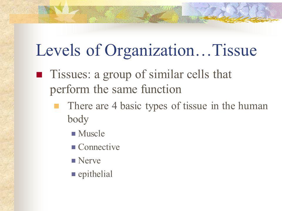 Levels of Organization…Tissue