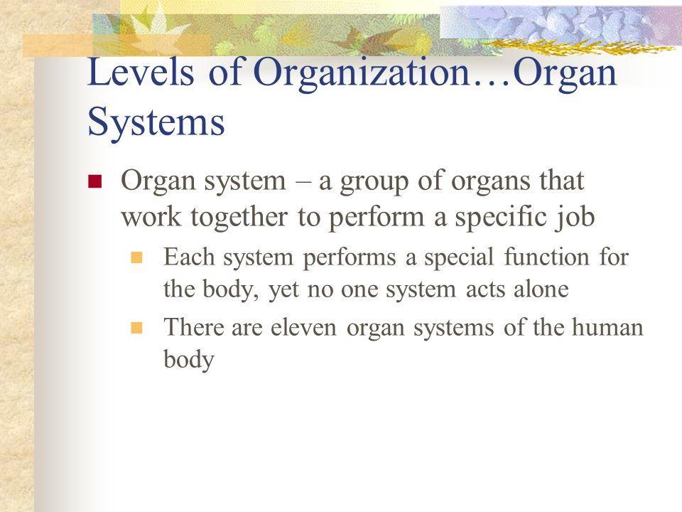 Levels of Organization…Organ Systems