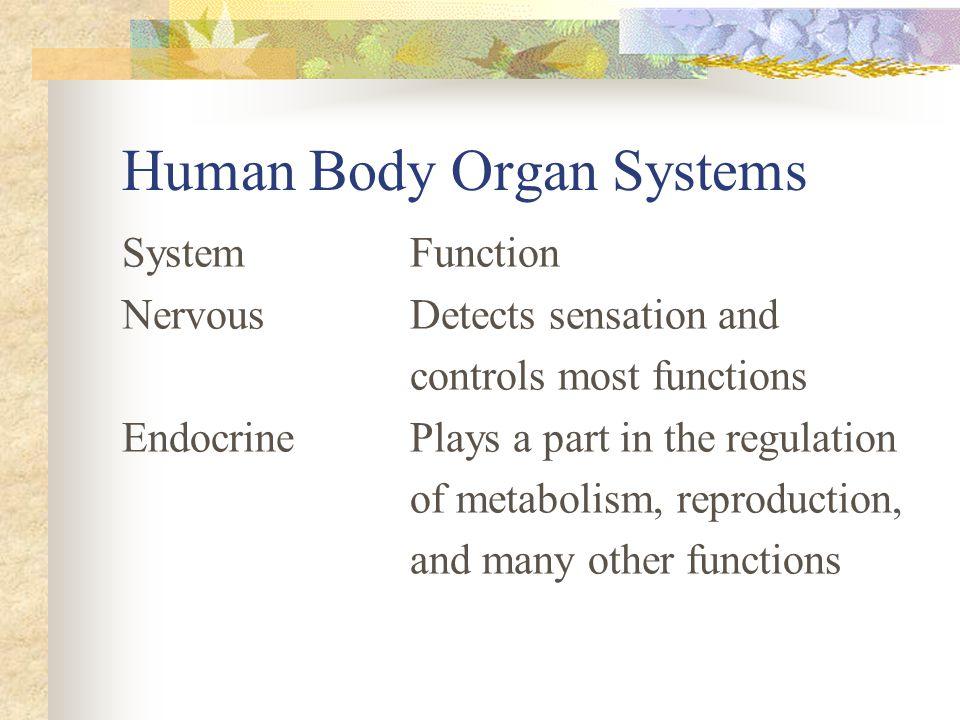 Human Body Organ Systems