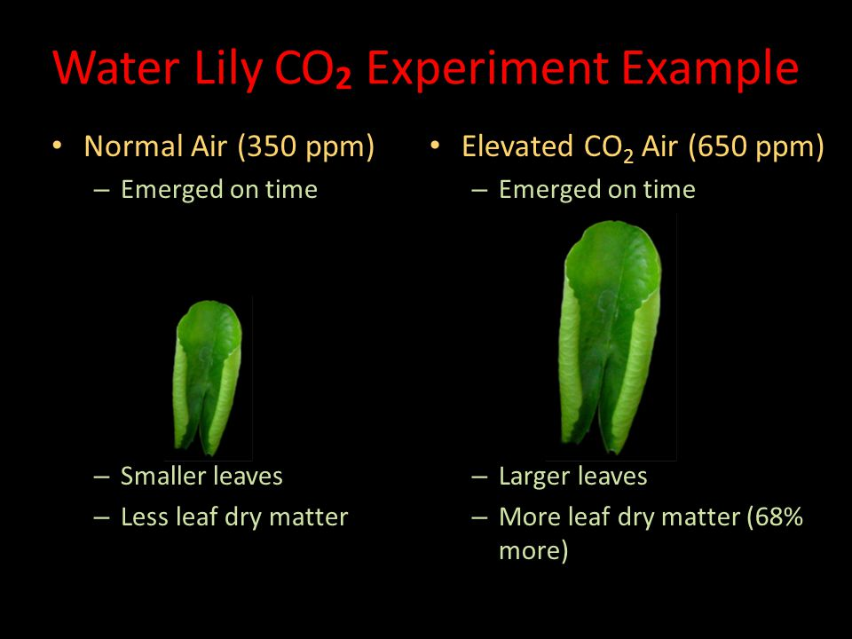 Water Lily CO2 Experiment Example