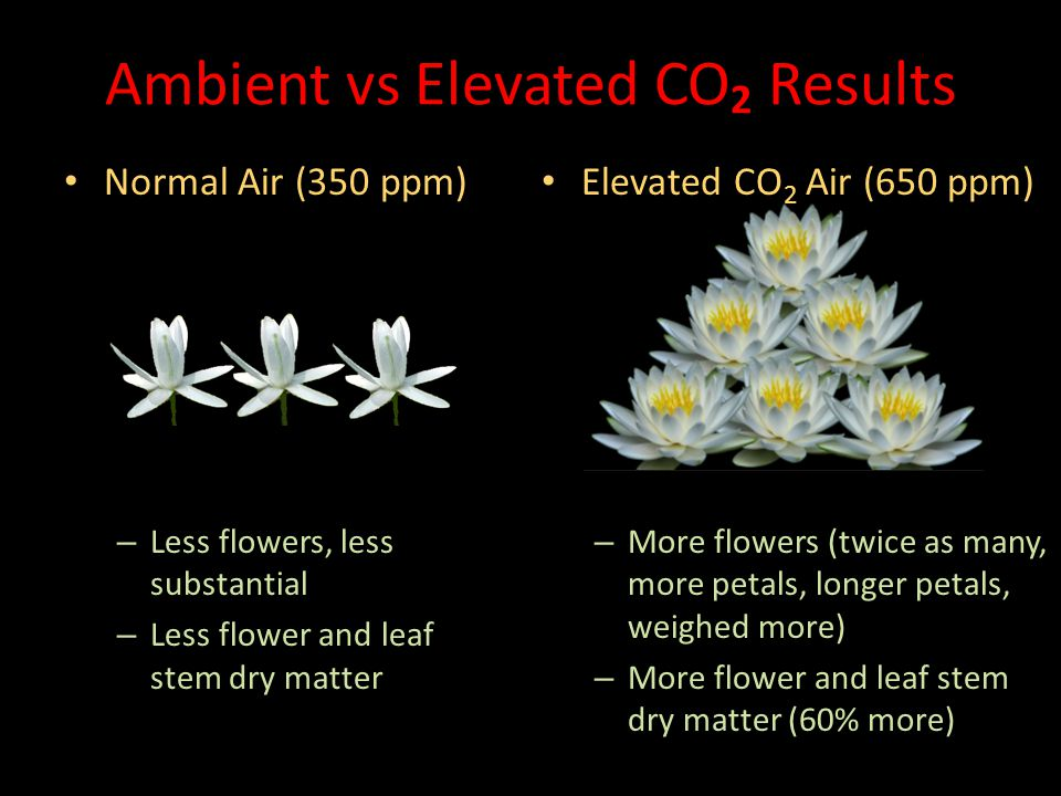 Ambient vs Elevated CO2 Results