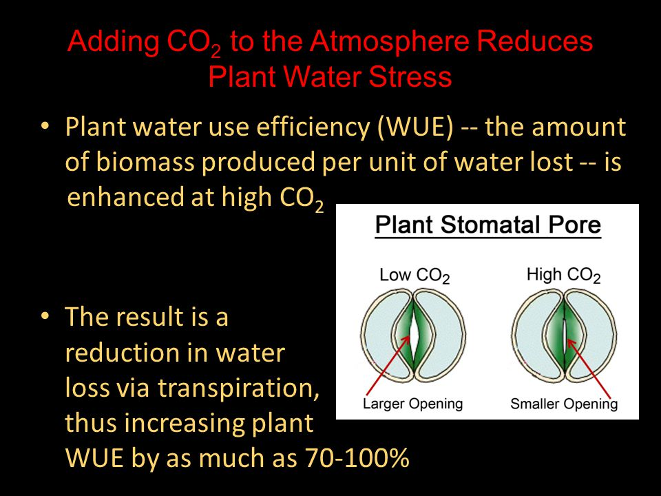 Adding CO2 to the Atmosphere Reduces Plant Water Stress