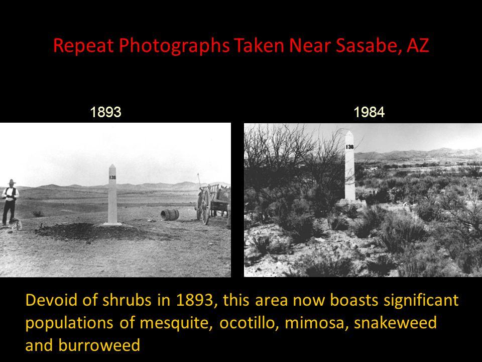Repeat Photographs Taken Near Sasabe, AZ