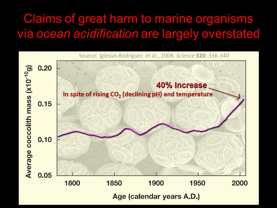Claims of great harm to marine organisms via ocean acidification are largely overstated