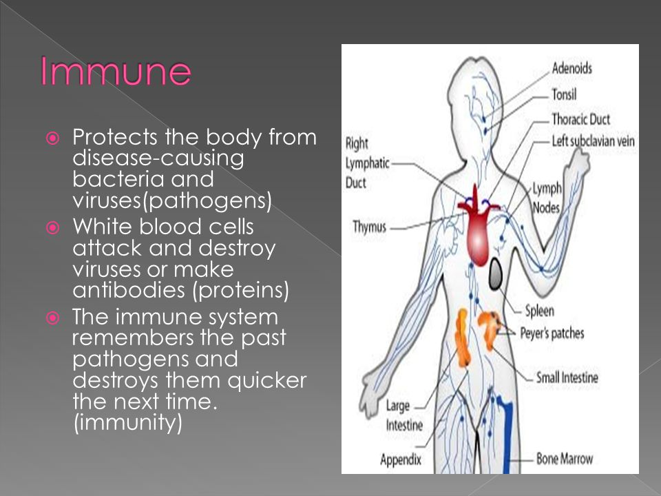 Immune Protects the body from disease-causing bacteria and viruses(pathogens)