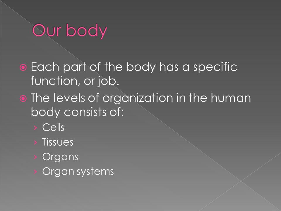 Our body Each part of the body has a specific function, or job.