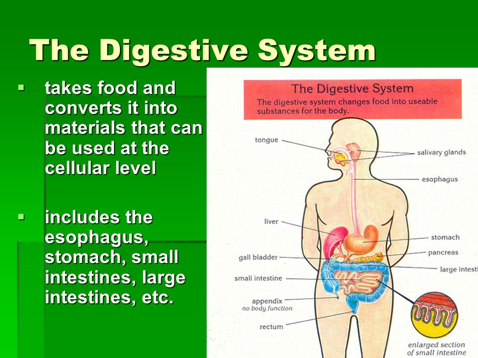 The Digestive System takes food and converts it into materials that can be used at the cellular level.