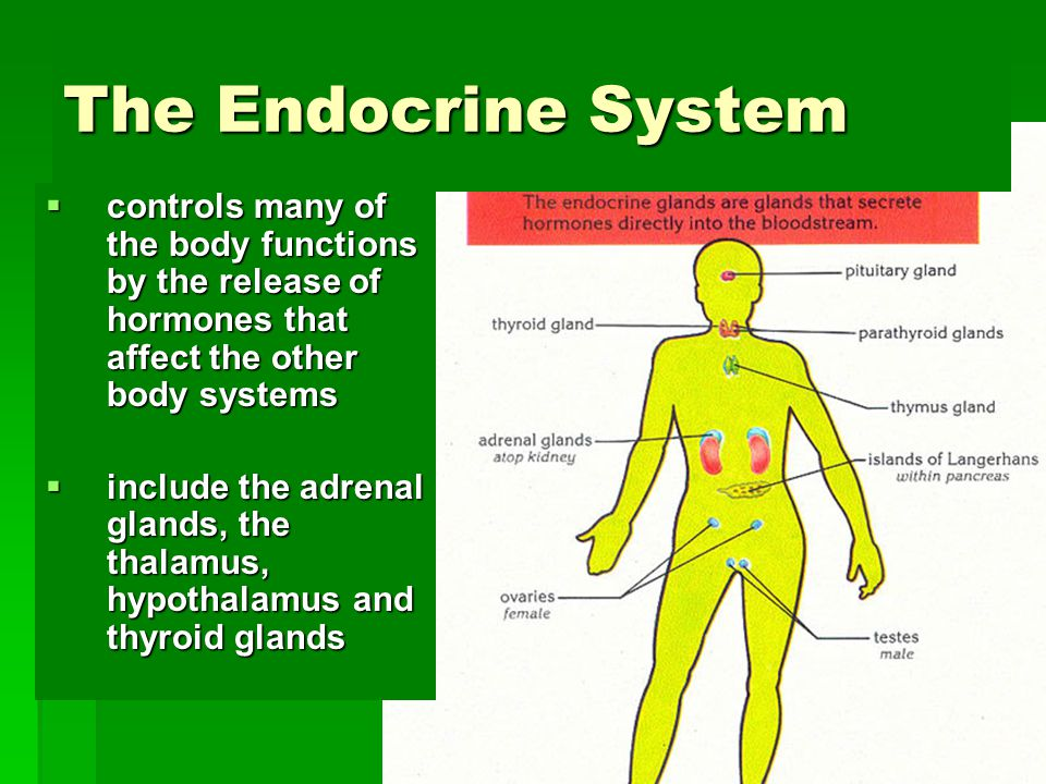 The Endocrine System controls many of the body functions by the release of hormones that affect the other body systems.
