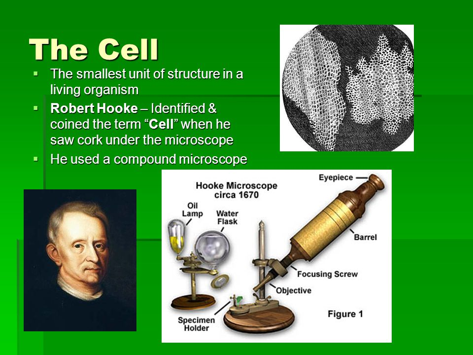 The Cell The smallest unit of structure in a living organism