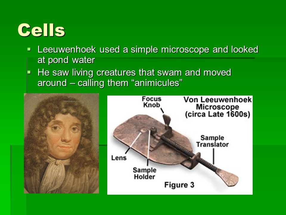 Cells Leeuwenhoek used a simple microscope and looked at pond water