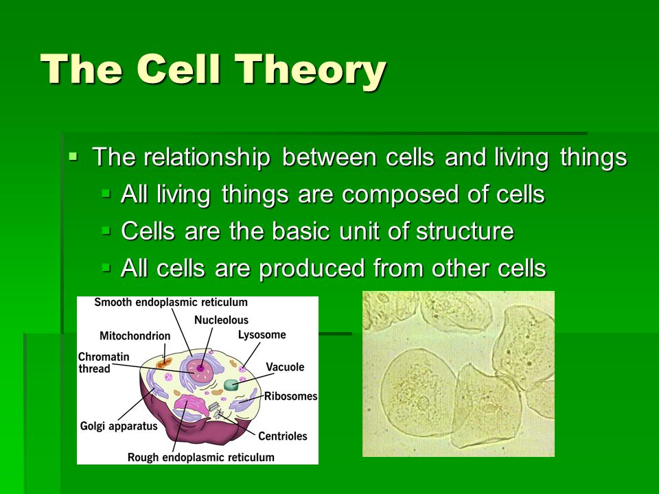 The Cell Theory The relationship between cells and living things