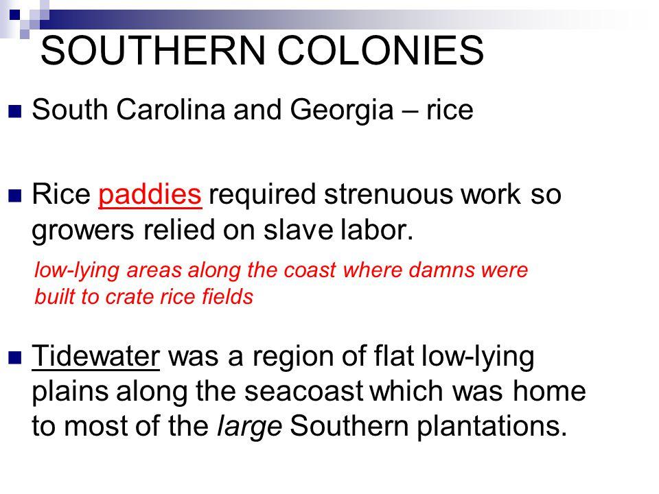 SOUTHERN COLONIES South Carolina and Georgia – rice