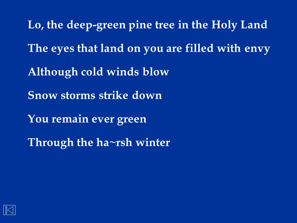 Lo, the deep-green pine tree in the Holy Land
