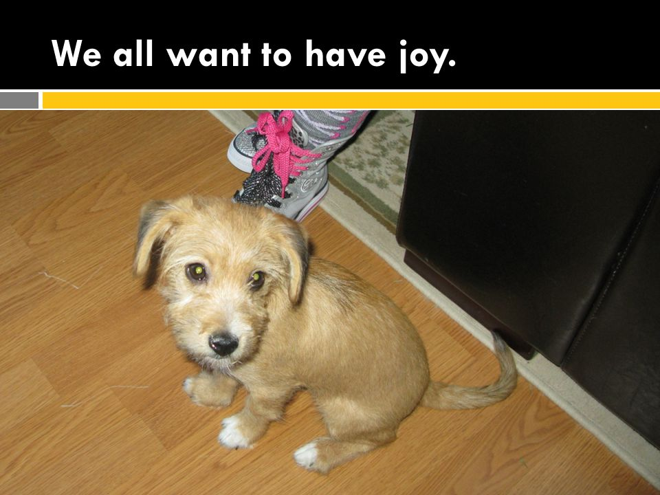 We all want to have joy.