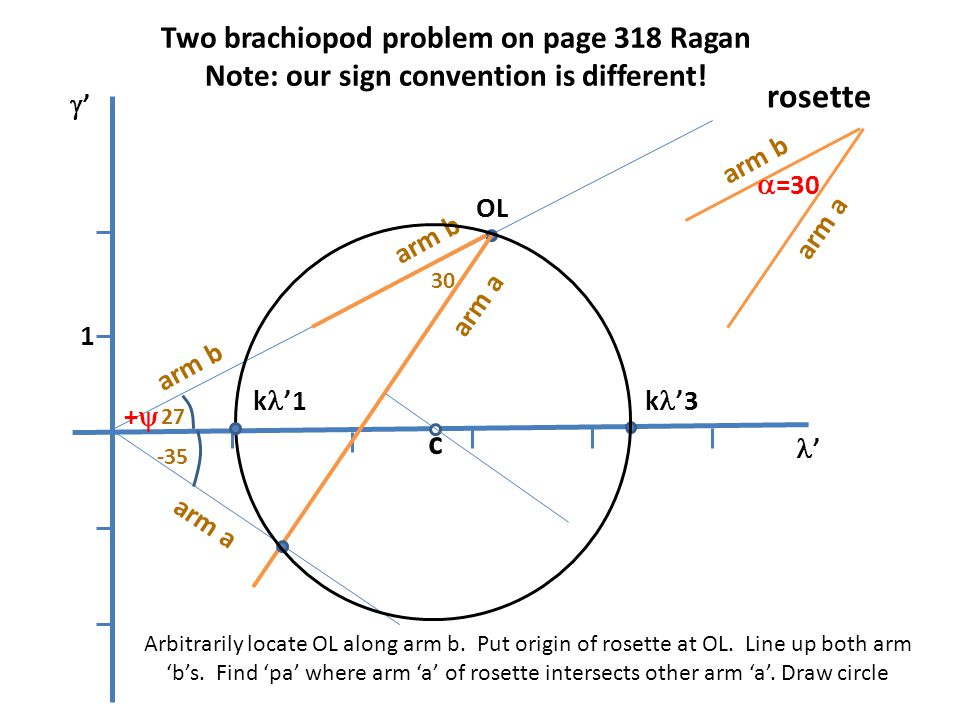 rosette c Two brachiopod problem on page 318 Ragan