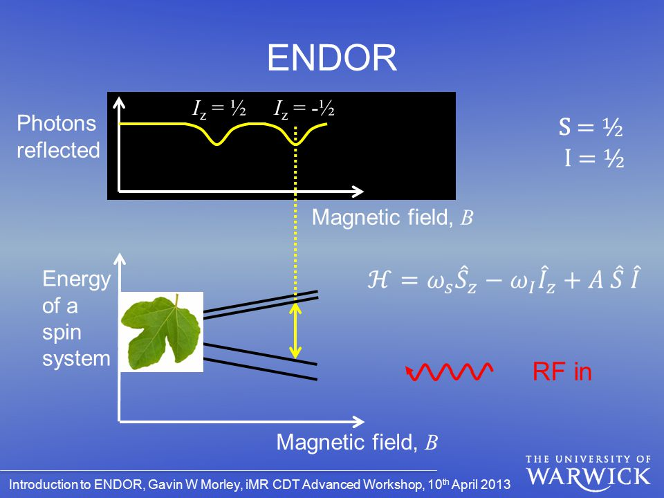 ENDOR S = ½ I = ½ RF in Iz = ½ Iz = -½ Photons reflected